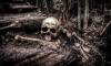 В Выборгском районе рабочие обнаружили спрятанные в электроподстанции человеческие останки