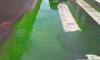 Петербуржцев напугала зеленая жижа на Выборгской набережной