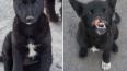Опубликованы фото щенка с Хабаровска, которому живодеры ...
