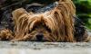 Кровавая бойня: в Воронеже уничтожат сотни бродячих собак из-за бешенства