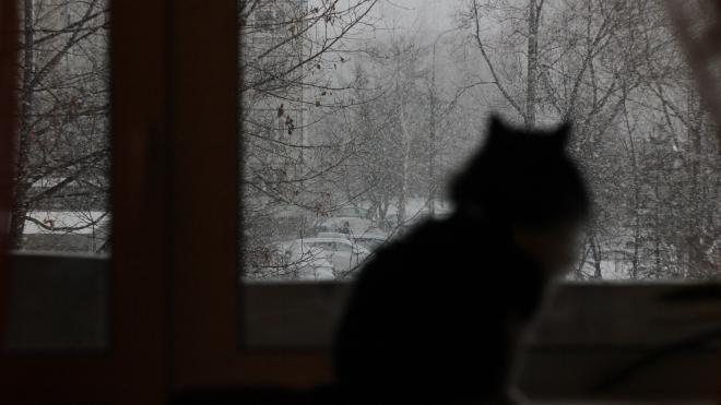 МЧС предупредило петербуржцев о метели и гололедице в воскресенье