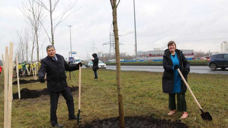 Общественники определят места, где граждане могут сажать деревья