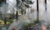 За незаконной вырубкой леса и лесными пожарами будут следить спутники Роскосмоса