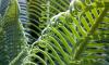 В Ботаническом саду к Новому Году украсили пальмы