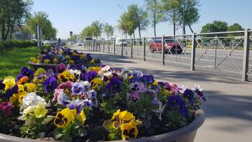 Петербург украсили цветами ко Дню города и ПМЭФ
