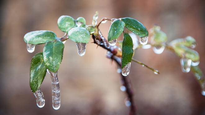 Россиянам пообещали аномальную погоду зимой