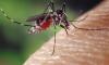 Фото: жительница Якутии кормит комаров