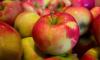 Специалисты Роскачества дали советы по выбору хороших яблок
