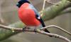 Эксперты рассказали, как теплая петербургская зима влияет на птиц