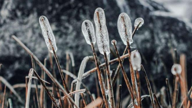 Зима в Приморске 2019: представлены работы победителей фотоконкурса
