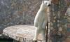 Сотрудники зоопарка попросили посетителей не подвергать зверей стрессу