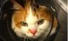 ТОП-МЕТРО: забавные животные в подземке Петербурга