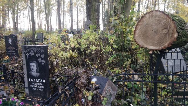 На Серафимовском кладбище спиленные деревья упали на могилы