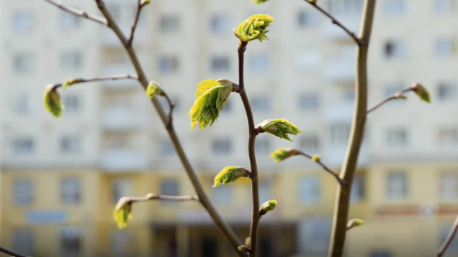 Март стал одним из самых теплых за всю историю наблюдений в Петербурге