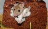 """Ученые будут наблюдать за мышами в космосе в режиме """"online"""""""