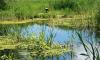 В пруду в Ленобласти нашли труп 5-летней девочки