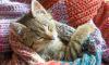 Современная клиника для животных появится в Сосновом Бору