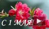 1 мая День труда, День весны. Поздравления с 1 мая в стихах, прозе