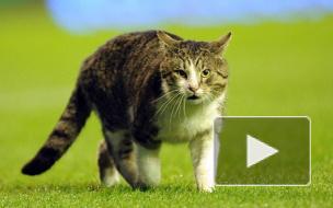 Матч «Ливерпуль»-«Тоттенхэм» был прерван из-за полосатого кота