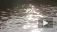Браконьеры под покровом ночи выловили в Неве рыбу ...