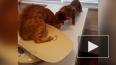 Забавное видео: кот спасает друга из лап ветеринара