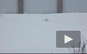 По уши в снегу, а он доволен