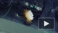 Редкое видео: Царица ночи распустилась в Ботаническом ...