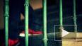 В Форносово мигрант изнасиловал 13-летнюю школьницу ...
