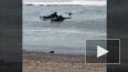 Отважное видео из Хабаровска: Мужчины спасли пса, ...