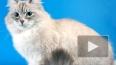 Медведев в Петербурге вновь припомнил «пропажу» кота ...