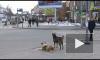 Возле «Елизаровской» стая собак кидается на прохожих