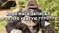 Илон Маск записал рэп про убитую гориллу