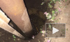 В Хабаровском крае пропавшего 2-летнего малыша нашли мертвым в яме с водой