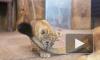 В Петербурге подведены итоги конкурса на лучшие имена для львят