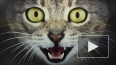 Кот-мутант покорил петербуржцев