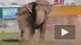 Польские слоны-трезвенники обосновались в Петербурге