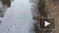 Видео: река у санатория в Сестрорецке загрязнена нефтепр...