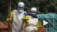 Последние новости: вирус лихорадки Эбола вышел из-под ...