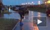 Видео: жители Мурино с пакетами на ногах переходят подтопленный двор
