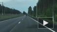 На трассе Комарово-Зеленогорск водители заметили лосят