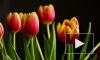 Поздравления с 8 марта в стихах и прозе, для мамы, подруги и жены