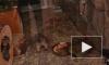 Видео: в Ленинградском зоопарке поселились маленькие прожорливые сурки