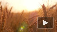 Россия экспортировала рекордное количество зерна