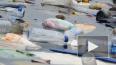 Greenpeace назвала основной вид мусора на берегах ...