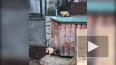 Весне быть: в Ленинградском зоопарке из спячки вышли ...