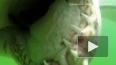 Видео: акула напала на американского дайвера