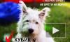 Пес Кубик поборется за кресло губернатора Ленинградской области на ближайших выборах