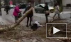 Жуткое видео из Казани: На человека упало дерево