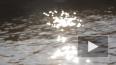 В Зеленогорске утопленника вынимали из воды на глазах ...
