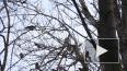 """Чужой против своих: на Васильевском острове сова """"прикин..."""
